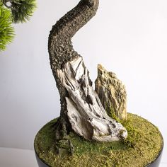 A hand-made tree in the Dragon Studio. Pine Tree, Bonsai, Dragon, Studio, Handmade, Hand Made, Pine, Dragons, Studios