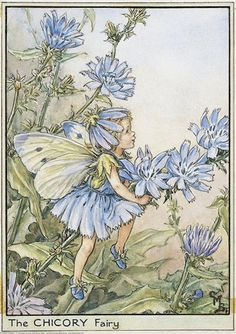 Chicory Fairy -- I love chicory - it's everywhere around here and reminds me of Cornflowers <3