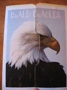 BALD EAGLES//My class and I are obsessed with bald eagles and since I will be teaching them again, next year, for 5th grade, I think this is an awesome project to do to learn more about our national mascot!