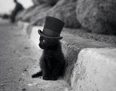 Kitty mit Zylinder