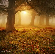 *** by Alvar Astúlez on 500px Oak Forest, Magical Pictures, Spring And Fall, Autumn Fall, Take My Breath, Mother Earth, Mother Nature, Breath Away, Nature Animals