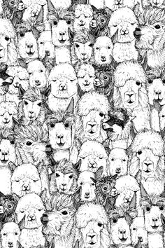 just alpacas black white Art Print by Sharon Turner | Society6