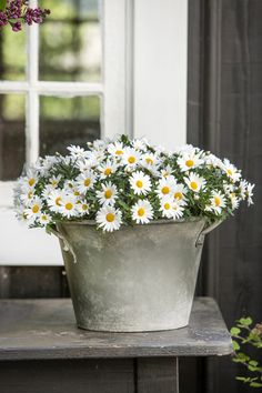 Daisies in a bucket. So simple, I love it. All I have to do is find a bucket. Oh dear here I come Mrs hens. x