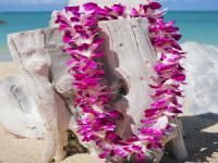 58 best hawaiian lei greetings images on pinterest honolulu honolulu airport lei greetings travel hawaii m4hsunfo