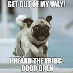 Pugs have a variety of facial expressions. For that reason, pug memes are funny and I hope these 101 dog memes featuring pugs bring a smile to your day! Funny Animal Jokes, Funny Dog Memes, Really Funny Memes, Cute Funny Animals, Funny Cute, Funny Dogs, Pug Dogs, Pug Meme, Pug Puppies