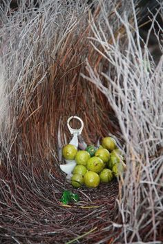 A Bower bird's nest decorated with gooseberries and aluminum can tabs