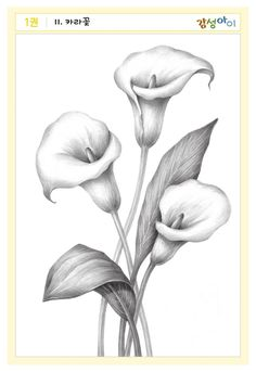 Flower Sketch Pencil, Pencil Drawings Of Flowers, Flower Sketches, Art Drawings Sketches Simple, Pencil Art Drawings, Lilies Drawing, Flower Art Drawing, Shading Drawing, Flower Drawing Tutorials