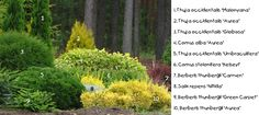 """BALTEZERS :: Galerija :: Dārzs LV  RUS  ENG  Sign in  Sign Up  News  Arboretum  Offer  Price list  About plants  Exports  Publications  Gallery  Video  SIA """"Kokaudzētava Baltezers"""" Tel.:67996370Fax:67904842E-mail:baltezers@baltezers.lv  Partners  Contacts  GalerijaAugiSkuju koki  « Iepriekšējā1234Nākamā »    Abies koreana Abies procera 'Glauca' Chamaecyparis lawsoniana 'Globus' Juniperus chinensis 'Blue Alps' Juniperus communis 'Gold Cone' Juniperus communis 'Horstmann' Juniperus…"""