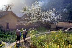 Phô Cao est une commune du district de Dông Van, province de Hà Giang. Phô Cao compte environ 5.000 habitants, pour la plupart des H'mông. Son marché se tient tous les 6 jours. Les maisons en torchis sont entourées de haies de pierres et les H'mông conservent toujours leurs costumes et leurs activités traditionnelles. Phô Cao est une adresse incontournable pour tous ceux visitant le Parc géologique de Dông Van.