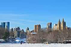 Winter in New York City: Central Park, Great Lawn in the morning today.