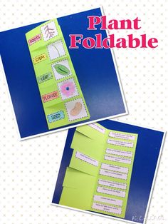 This plant set includes posters, a foldable, a booklet, and much more to teach your students about the parts of a plant!