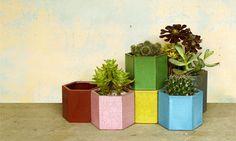 hexagonal pots