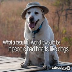 what a beautiful world it would be if people had hearts like dogs (and if dogs had hats like people!)