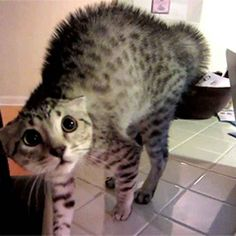 33 More Awesome Facts About Cats