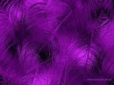 """Képtalálat a következőre: """"purple"""""""