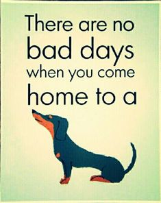 Dachshund...I remember this to be true before my doxie babies passed away!   I miss you both!  Muuver Dachshund Love, Daschund, Funny Dachshund, Dachshund Puppies, Weenie Dogs, Dogs And Puppies, Dachshund Quotes, Doggies, Dog Mom