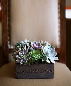 portador del anillo caja de madera de plantas suculentas