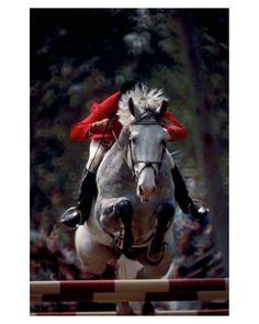 """Hunter Jumper  www.goldenrabbitsaddlery.com  For 50% off, use coupon code """"ThankYou"""" at check out!"""