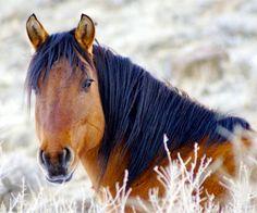 Magnum, A colorado Wild Horse from The Little Book cliffs wild horse range