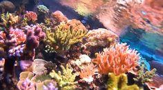 http://actioncam-freestyle.de/der-unterwassermodus-fur-taucher-actionpro-x7-tipp-nummer-2/  Tipp #2 Actionpro X7 Hier zeigen wir euch den Unterwassermodus der Actionpro X7 Actioncam. Durch diesen Modus werden die Farben unter Wasser deutlicher, natürlicher und kräftiger.