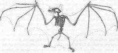skeleton of bat