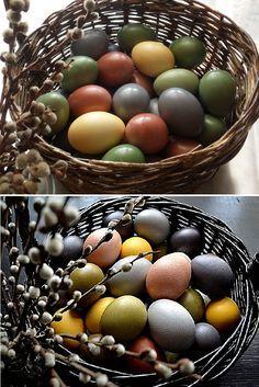 Таблица натуральных красителей для окраски Пасхальных яиц (в скорлупе)*КРАСНЫЙ (розовый) ЦВЕТ – отвар КОРЫ ВИШНИ или ВЕТОК ВИШНИ. СИНИЙ (голубой) ЦВЕТ – отвар ягод ЧЕРНИКИ,ЖЕЛТЫЙ ЦВЕТ – раствор КУРКУМЫ,КОРИЧНЕВЫЙ ЦВЕТ – дает отвар КОРЫ ДУБА, отвар ШЕЛУХИ ЛУКА,ЗЕЛЕНЫЙ ЦВЕТ – если в процеженный отвар ЧЕРНИКИ добавить порошок КУРКУМЫ,БОРДОВЫЙ, ВИННЫЙ ЦВЕТ – поучится , если отварить яйца в КРАСНОМ ВИНЕ,