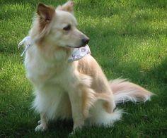 Our Neurotic Dog http://espressoshotcreations.myfreesites.net/esc-blog/our-neurotic-dog