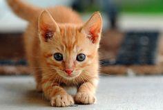 kitttykats