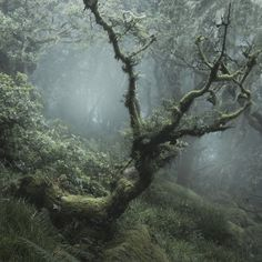 A remnant of an ancient forest near Devon, England. It is likely to be a left-over from the ancient forest that covered much of. Nature Aesthetic, Forest Fairy, Magical Forest, Fairy Dust, Pics Art, Belle Photo, Faeries, Beautiful Places, Scenery