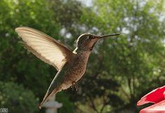 Veggie por natureza !: Na Natureza cada vida tem sua finalidade e vem par...