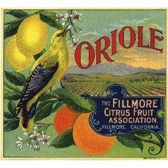 Fillmore, Ventura County Oriole Bird Orange Citrus Fruit Crate Box Label Art Print