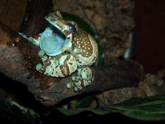 Amazon Milk Frog : home decor color pallet inspiration