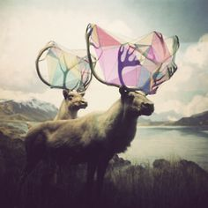 Beautiful caribou and geometric shapes in the horns