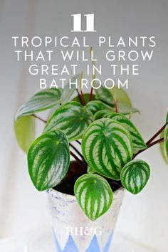 Your bathroom could use some greenery too! Each of these plants will appreciate the extra humidity and dim lighting. #tropicalplants #houseplants #indoorgardening #plantsforyourbathroom #bhg Pot Plants, Dim Lighting, Tropical Plants, Beautiful Bathrooms, Houseplants, Greenery, Paint Colors, How Are You Feeling, Projects