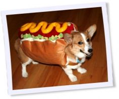 I think #dog #Halloween #costumes are cool. I love dogs and I think they should have fun like us on Halloween. Visit us for more  dog Halloween costumes... for more costumes visit http://www.squidoo.com/top-10-selected-dog-halloween-costumes