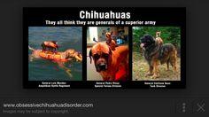 Lol Funny Chihuahua, Amphibians, Battle, Army, Lol, Gi Joe, Military, Combat Boots, Fun