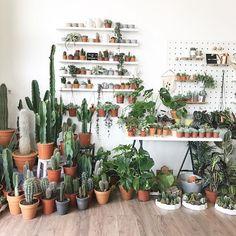 So many cacti, so little time. • geo-fleur.com #geofleur •