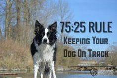 Kris Crestejo explains her seventy five twenty five rule, which will help your dog stay on track when you're outside.