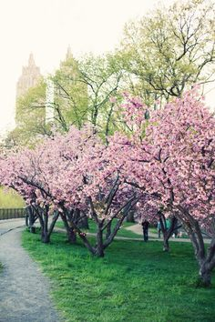 Central Park, NYC,  Spring