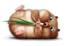 from http://hamster.herokuapp.com/