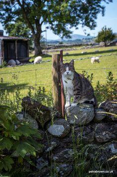 """mydododied:""""Farm cat"""""""