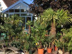 Steyr, Plants, Plant, Planets