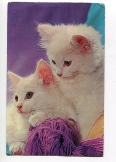 A pair of Cuties Very nice American Cats by sharonfostervintage, $1.50