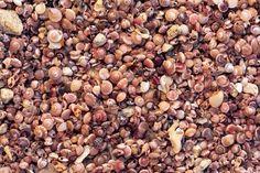 Shells billionaire   #shells #seashells #background #texture #closeup #mix #pattern #many
