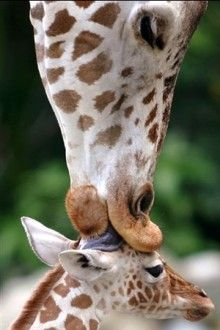 Motherly love!