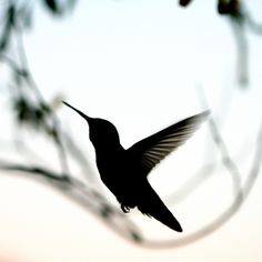 hummingbird silhouette - Google Search