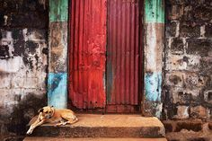 A dog takes a rest on the steps of a door into the compound in Murray Town, Freetown, Sierra Leone