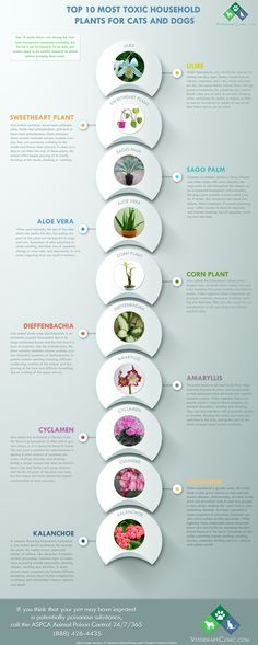 http://veterinaryclinic.com/top-10-most-toxic-plants-to-pets.html