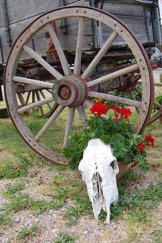Wagon Wheel W/Flowers And Skull – Front Yard İdeas Ranch, Inside Garden, Old Wagons, Flower Cart, Rustic Gardens, Wheelbarrow, Front Yard Landscaping, Flower Beds, Garden Art
