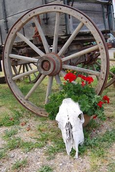 Wagon Wheel W/Flowers And Skull (more flowers and a deer skull or herford bull)
